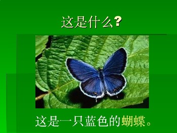 Science- Butterfly Life Cycle in Chinese
