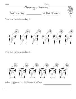 Science carnation color worksheet by dawn teachers pay teachers science carnation color worksheet ccuart Images
