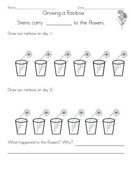 Science: Carnation Color  Worksheet