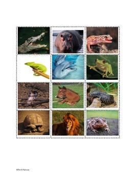 Science: Categorizing amphibians, mammals, and reptiles