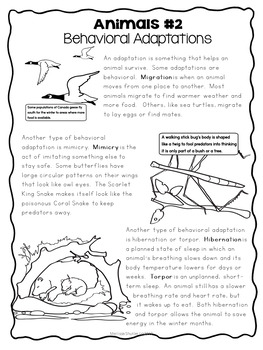 Science Center- Animal Adaptations, Symbiotic Relationships, and Survival