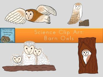 Science Clip Art: Barn Owls