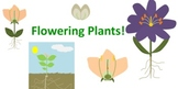 Science Clip Art--Flowering Plants