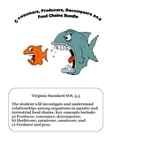 Science:  Consumers, Producers & Food Chain Worksheet Bundle