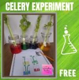 Science Experiment - Celery FREEBIE