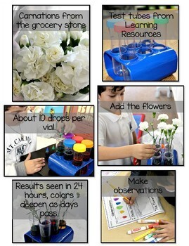 Science Fair Project - Colorful Carnations