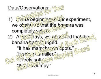 Science Fair Project - Science Experiment - Which Banana Tastes Sweeter