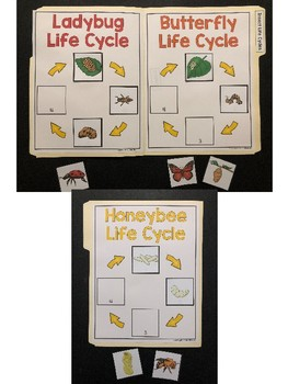 Science File Folder Activity ~ Insect Life Cycles