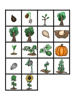 Science File Folder Activity ~ Plant Life Cycles