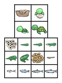 Science File Folder Activity ~ Water Animal Life Cycles