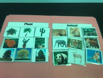 Science File Folder Games- Plant or Animal Sort