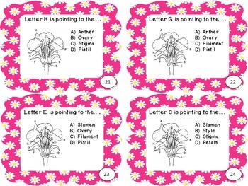 Science Files - Flowering Plants - Flower Parts and their Functions Task Cards