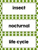 Science Firefly Life cycle with book How to Survive as a Firefly Reader Response