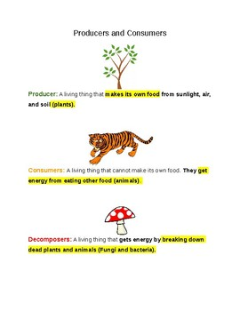 Science Food Chain Vocabulary