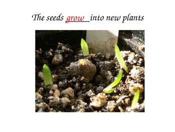 Science - From seed to plant