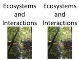 Science Fusion 3rd Grade Interactive Notebook Unit 4 Ecosystems Food chains webs