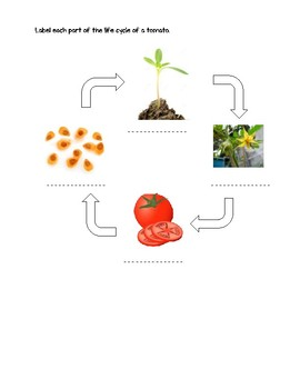 Science Fusion 3rd Grade Unit 3 Lesson 1 - What Are Some Plant Life Cycles