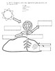 Science Fusion - 4th Grade - Unit 3 - Lesson 1 - What Are Some Plant Structures