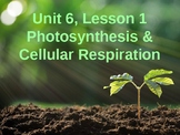 Science Fusion Unit 6, Lesson 1: Photosynthesis and Cellul