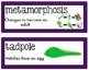 Science Fusion Vocabulary Cards Second Grade Unit 9