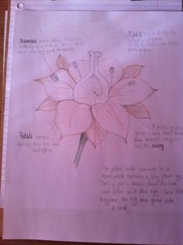 Science Grade 3 - PLANTS