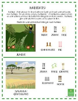 Science - Habitats, Characteristics and Adaptations All Kinds of Feet Worksheet