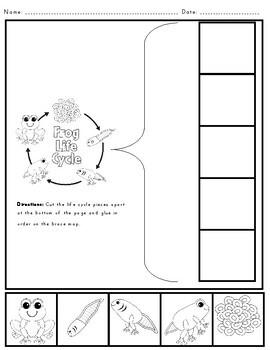 Science: Hip Hop Frog Unit (2nd Grade Common Core 2L 1.1)