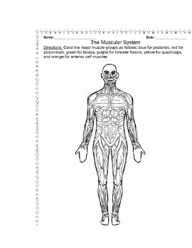 Science Human Body Unit