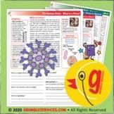 Coronavirus: Viruses vs. Bacteria - Elementary Montessori