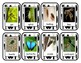 Science Insects Color Photo Flashcards Games Centers Instr