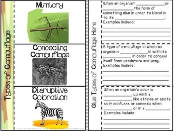 Evolution - Interactive Notebook