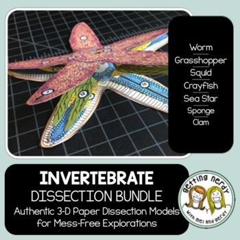Dissection - Invertebrate Animals