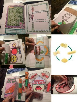 Science Interactive Notebook- Life Cycle of an Insect