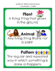 Science Investigations: Needs of Plants and Animals