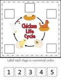 Science Life Cycle of a Chicken Numerical Order preschool homeschool game.