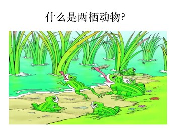 Science- Life Cycle of a Frog Chinese