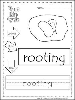 Science Life Cycle of a Plant Color, Read, Trace preschool homeschool worksheets