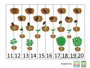 Science Life Cycle of a Plant Number Sequence Puzzle 11-20 preschool homeschool