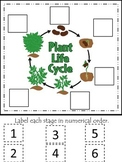 Science Life Cycle of a Plant Numerical Order preschool homeschool game.