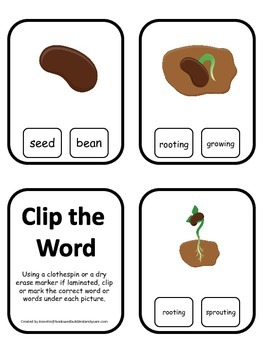 Science Life Cycle of a Plant Word Clip it Cards preschool homeschool game.