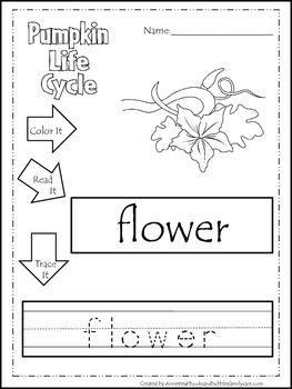 Science Life Cycle of a Pumpkin Color,Read,Trace preschool homeschool worksheets