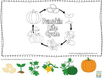 Science Life Cycle of a Pumpkin Picture Matching preschool homeschool game.
