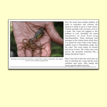 Science Literacy Sub Plan - The Strange Truth About Zombie Crickets