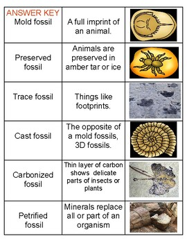 Science Literacy: Types of Fossils