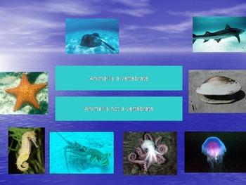 Sea Animals Dichotomous Key