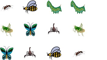 Science Memory: Bugs!