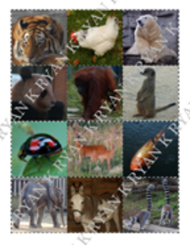 Science Memory Game: Animals with Vibrant Color Photographs (Zoo and Wild)