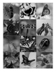 Science Memory Game: Insects with Vibrant Color Photographs (Bug and Butterfly)