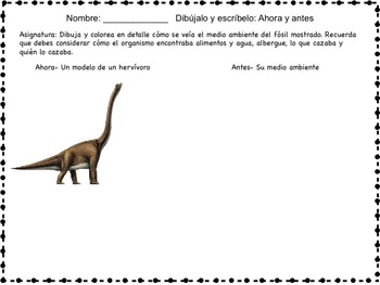 Science Packet: Fossils- Evidence of the past IN SPANISH Fósiles