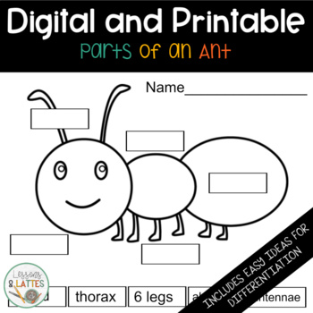 Parts Of An Insect Worksheet | Teachers Pay Teachers
